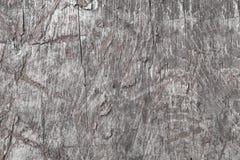 Den ljusa texturen av de gamla träplankorna knäckte och med stycken av torkad målarfärg, abstrakt bakgrund som var retro, Royaltyfria Foton