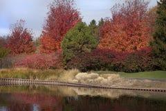 Den ljust färgade nedgången färgar på träd i skog nära dammet Royaltyfri Fotografi