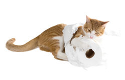 Den ljust rödbrun katten drar en rulle av toalettpapper Arkivbild