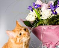 Den ljust rödbrun katten luktar en bukett av blommor Fotografering för Bildbyråer