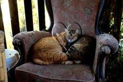 Den ljust rödbrun katten och strimmig kattkatten krullade upp på en gammal fåtölj royaltyfri foto
