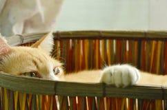 Den ljust rödbrun katten som är sömnig i vävd korg och, lyfter tafsar upp på kant Fotografering för Bildbyråer