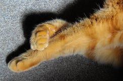 Den ljust rödbrun katten tafsar korsade ben Arkivfoto