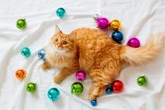 Den ljust rödbrun katten ligger på säng bland julgarneringar Royaltyfria Bilder