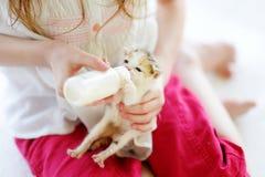 Den Llittle flickan som matar den lilla kattungen med, mjölkar Fotografering för Bildbyråer