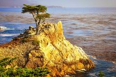 Den Lone Cypressen Royaltyfria Foton