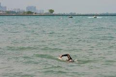 Den Lone simmaren simmar laken Michigan fotografering för bildbyråer