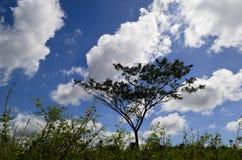 Den Lone treen, gräs, fördunklar Royaltyfria Foton