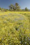 Den Lone treen och den färgrika buketten av fjädern blommar Royaltyfri Fotografi