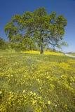 Den Lone treen och den färgrika buketten av fjädern blommar Arkivbild