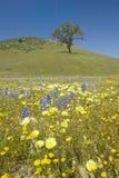 Den Lone treen och den färgrika buketten av fjädern blommar Royaltyfri Foto
