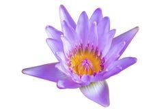 Den Lotus blomman till den idérika modellen och textur planlägger med bakgrund Fotografering för Bildbyråer
