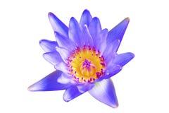 Den Lotus blomman till den idérika modellen och textur planlägger med bakgrund Royaltyfri Bild