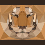 Den lösa tigern stirrar framåtriktat Natur och bakgrund för tema för djurliv Abstrakt geometrisk polygonal triangelillustration Arkivfoton