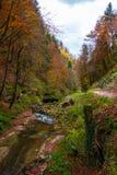 Den lugna floden flödar i en härlig höstskog arkivbilder