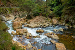 Den lugna floden kör till och med skogen på Dickey Flat Campsite Karangahake, Nya Zeeland arkivfoto