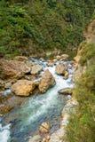 Den lugna floden kör till och med skogen på Dickey Flat Campsite Karangahake, Nya Zeeland royaltyfri bild