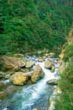Den lugna floden kör till och med skogen på Dickey Flat Campsite Karangahake, Nya Zeeland royaltyfria foton