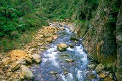 Den lugna floden kör till och med skogen på Dickey Flat Campsite Karangahake, Nya Zeeland royaltyfria bilder