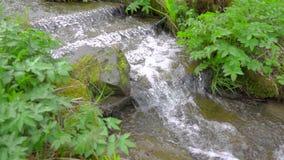 Den lugna våren klev strömvattenflöden mellan gräs och växter i ultrarapid stock video