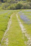 Den Lupine fodrade grusvägen till och med våren blommar och grönt gräs av Kalifornien av rutt 58, öst av Santa Margarita, CA Arkivfoto
