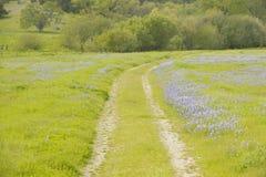 Den Lupine fodrade grusvägen till och med våren blommar och grönt gräs av Kalifornien av rutt 58, öst av Santa Margarita, CA Arkivbilder