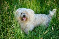 Den lurviga hunden i sommar parkerar fotografering för bildbyråer