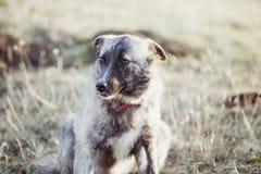 Den lyckliga adoptiv- tillfälliga hunden, adopterar shoppar inte arkivfoto