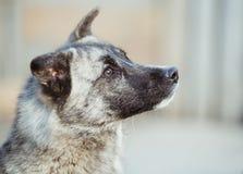 Den lyckliga adoptiv- tillfälliga hunden, adopterar shoppar inte arkivbilder
