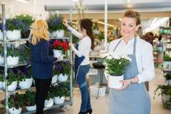 Den lyckliga blomsterhandlaren Holding Flower Pot shoppar in royaltyfria bilder