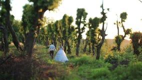 Den lyckliga brudgummen och bruden rymmer händer och går på bakgrunden av den gröna skogen i solnedgång arkivfilmer