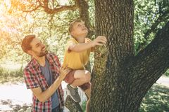 Den lyckliga fadern hjälper hans son att klättra upp trädet Den oförskräckta pojken klättrar upp Han är oförskräckt pojke som ser Arkivbilder