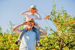 Den lyckliga fadern med hans unga son har gyckel på citrus Arkivbild