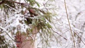 Den lyckliga flickan skakar snön från trädfilialen i den lyckliga barndomen för skogen körning av rolig pulkavinter lager videofilmer