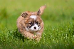 Den lyckliga hunden behandla som ett barn Royaltyfria Bilder