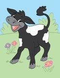 Lycklig kalv Arkivbild