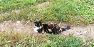 Den lyckliga katten på sommar går royaltyfri foto