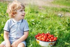 Den lyckliga lilla litet barnpojken väljer på en organisk jordgubbelantgård för bär Arkivfoto