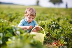 Den lyckliga lilla litet barnpojken väljer på jordgubbar för en bärlantgårdplockning Royaltyfri Foto