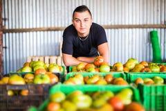 Den lyckliga organiska bonden med tomater boxas att posera med skörden in Royaltyfri Bild
