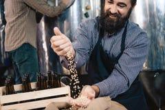 Den lyckliga skäggiga mannen i förkläde häller korn in i handen av hantverkbryggeriet Process av öltillverkning royaltyfri fotografi