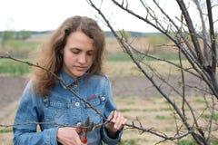 Den lyckliga trädgårdsmästarekvinnan som använder beskära sax i fruktträdgård, arbeta i trädgården. Nätt stående för kvinnlig arbe Royaltyfria Bilder