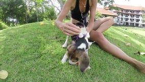 Den lyckliga unga flickan med hennes beaglehund med plumeria i sommar parkerar långsam rörelse Utomhus stående långsam rörelse tr arkivfilmer