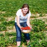 Den lyckliga unga kvinnan väljer på jordgubbar för en bärlantgårdplockning Arkivbilder