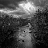Den lynniga flodgretaen arkivfoto