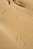 Den mänskliga foten på sanden Royaltyfri Fotografi