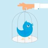 Den mänskliga handen rymmer en bur med den blåa ilskna fågeln Arkivfoto