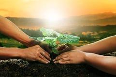 Den mänskliga handen som planterar den unga växten på smutsjord mot, är tillsammans Arkivbild