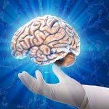 Den mänskliga hjärnan Fotografering för Bildbyråer