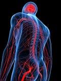 Den mänskliga nervsystemet stock illustrationer